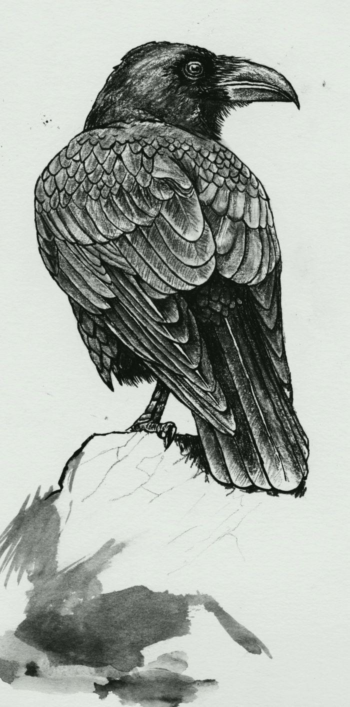 Drawn raven smoke Black CROWS illustration best of