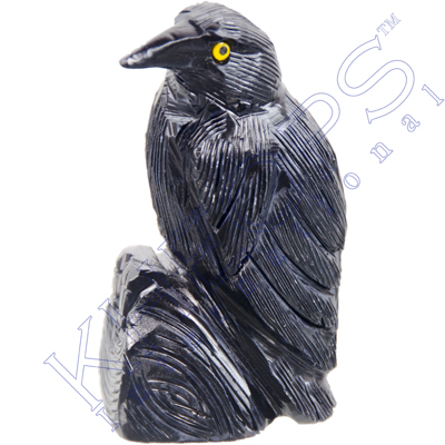 Drawn raven spirit animal Black 3 Animal Animal International