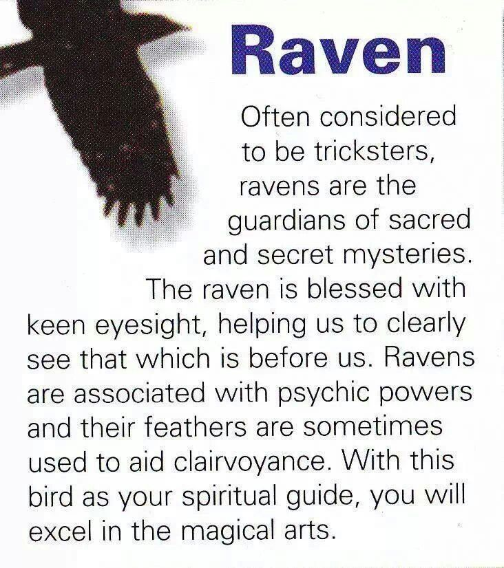 Drawn raven spirit animal Birds Pinned 17 guides on