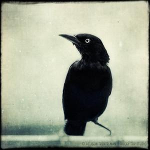 Drawn raven spooky Photo Decor Polyvore Raven Spooky
