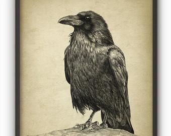 Drawn raven stuffed Crow Bird Raven drawing Raven
