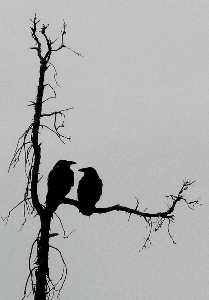 Drawn raven tree On Pinterest Best Raven ideas