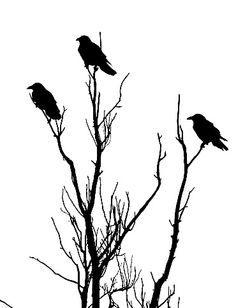 Drawn raven tree Raven stamps template silhouette