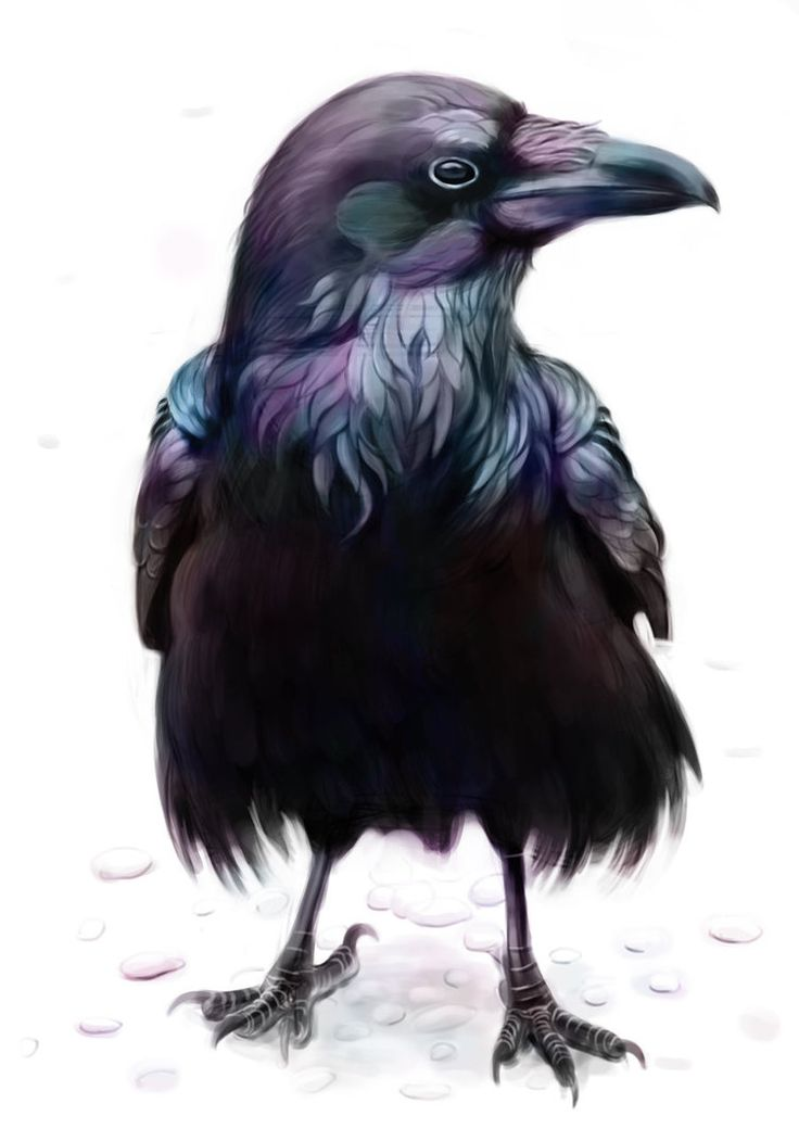 Drawn raven trickster Is images in myths Native