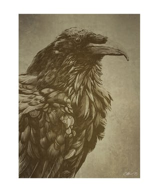 Drawn raven victorian Raven  The A Peeler