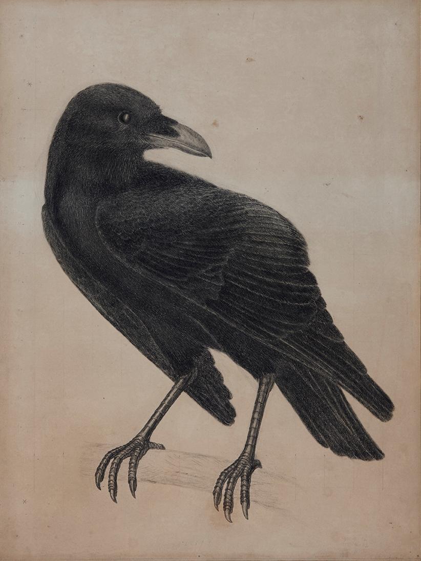 Drawn raven victorian Watercolour Hunt Webb raven c