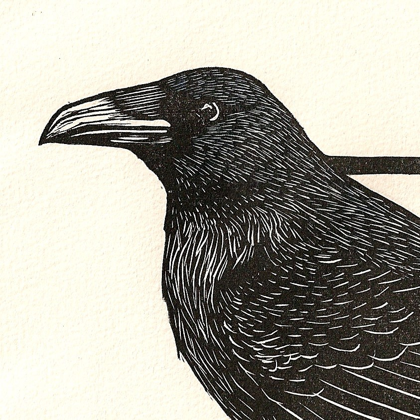 Drawn raven woodcut  Raven Colored Hand with