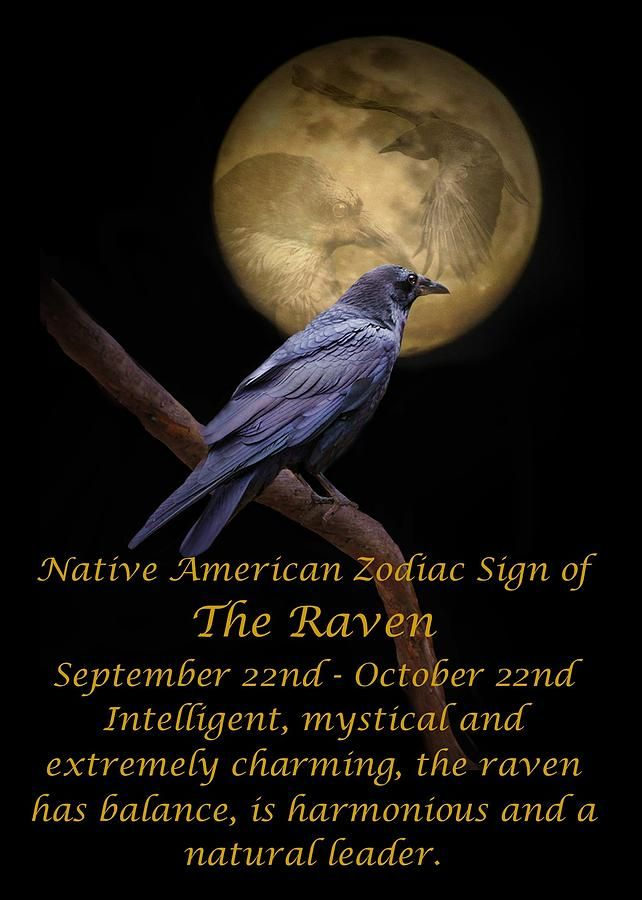 Drawn raven zodiac The The Raven about best