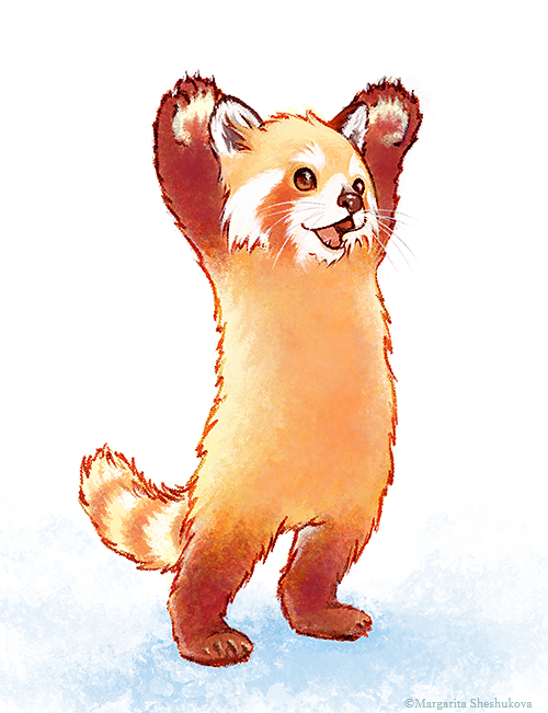 Drawn red panda ))) stop I draw margaritash: