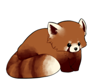 Drawn red panda cartoon Chibi Panda panda red Chibi