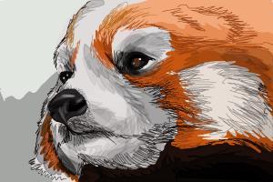 Drawn red panda china red How Panda Red Draw a