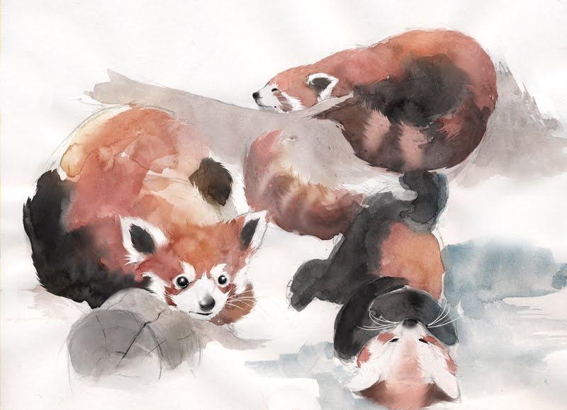 Drawn red panda china red Journey http://my Stephan Stephan pandas