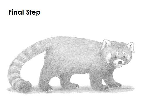 Drawn red panda china red Draw to How Panda Panda