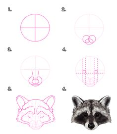 Drawn red panda easy Tuts+ Animals: Draw to and