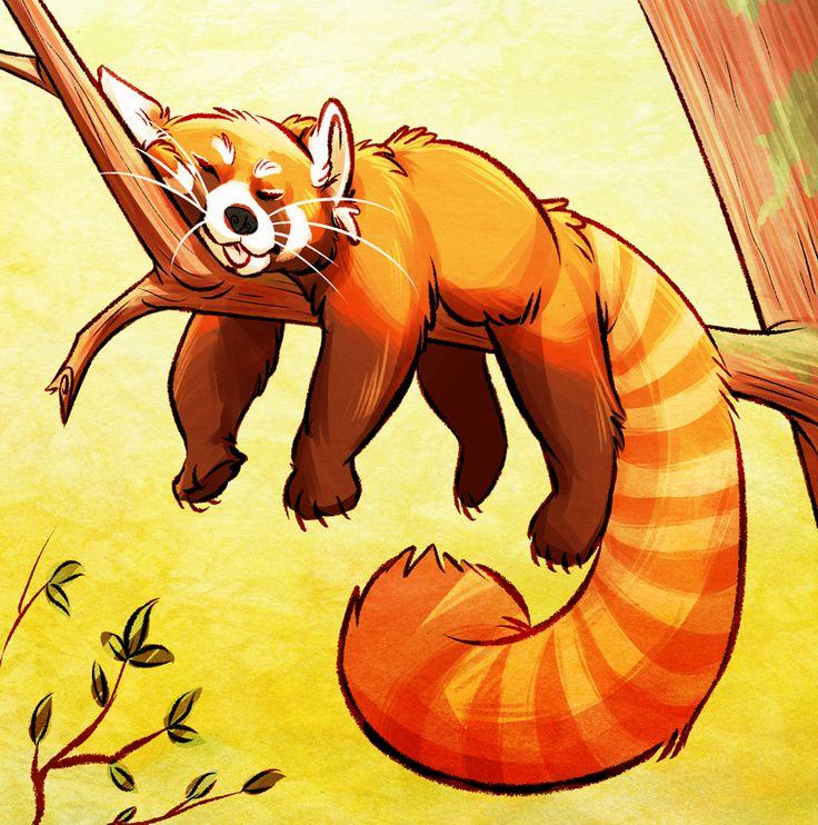 Drawn red panda endangered Best Pandas Pinterest Red 19