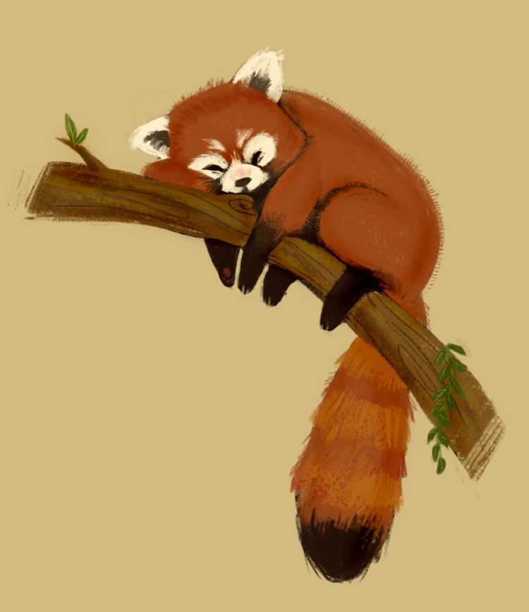 Drawn red panda endangered Pin lil' more he's Red