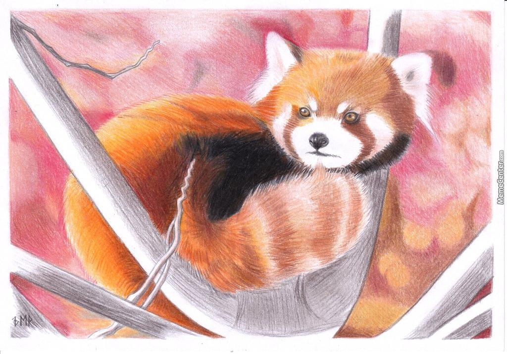 Drawn red panda epic Of A I Which Red