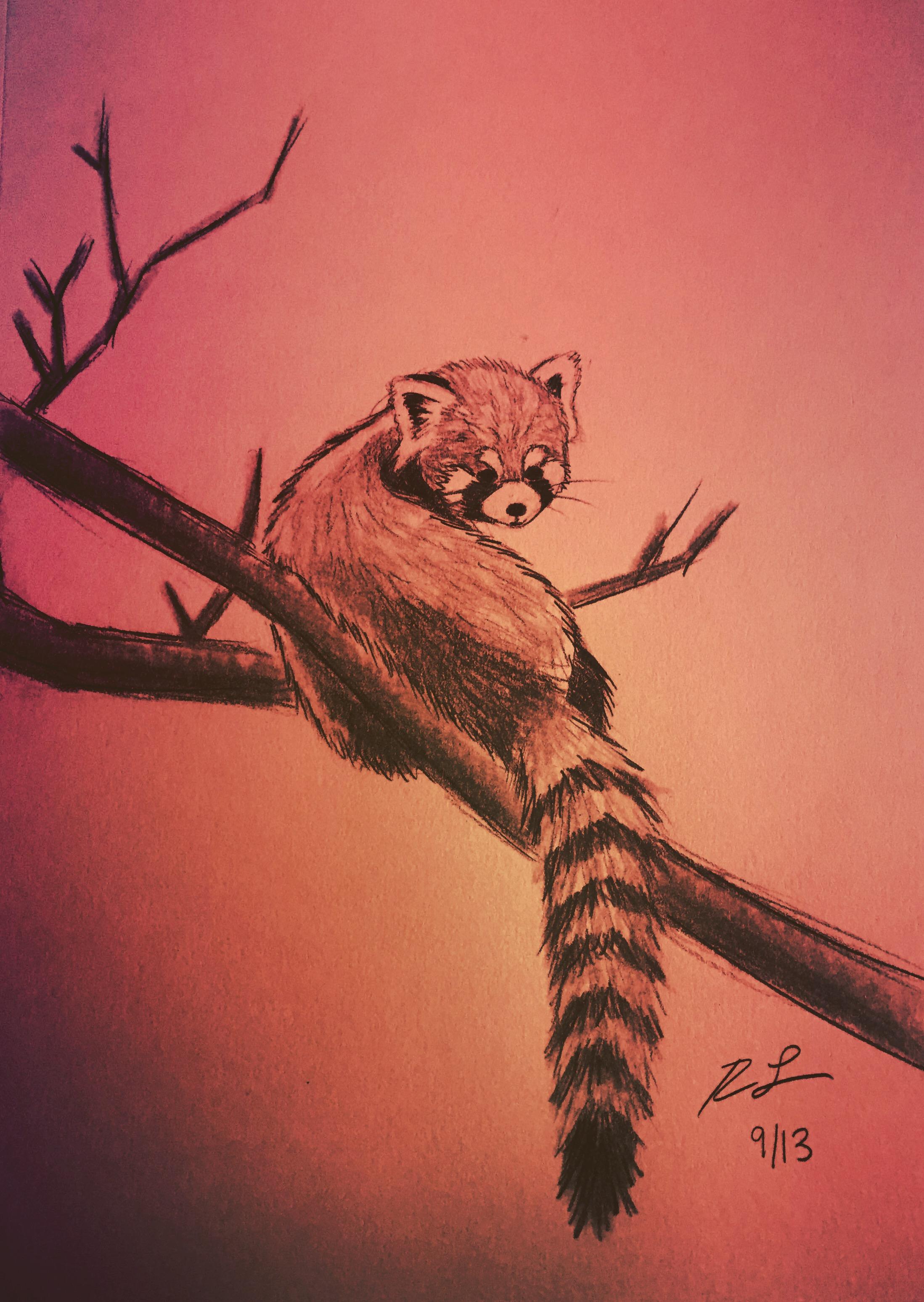Drawn red panda epic Sketch Pinterest Panda Rhoda Red