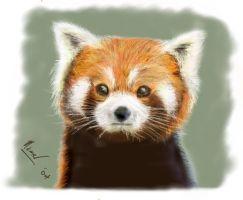 Drawn red panda epic Ojntoothpaste panda Red Red panda