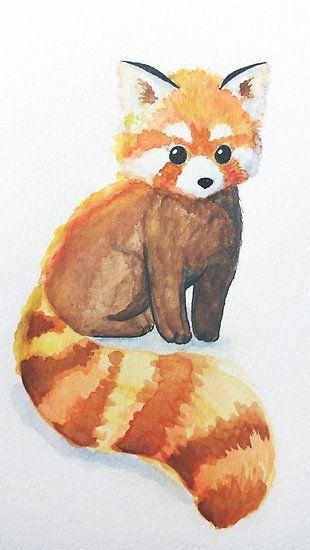 Drawn red panda indian fox Best ideas on  Pandas