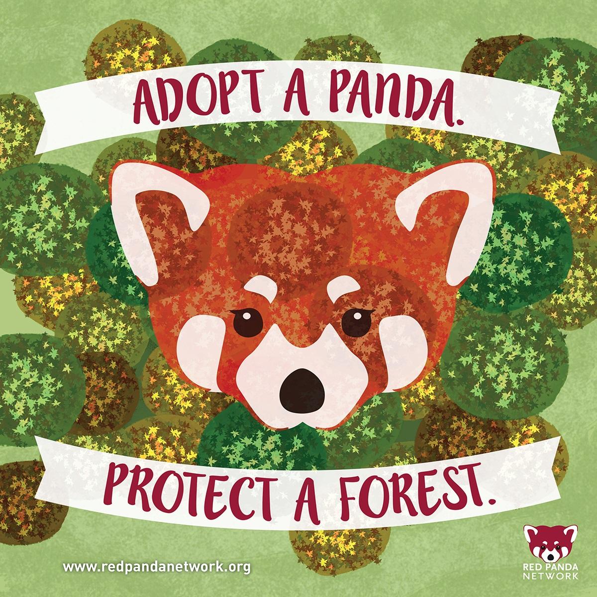 Drawn red panda its habitat Panda Network red Results kids