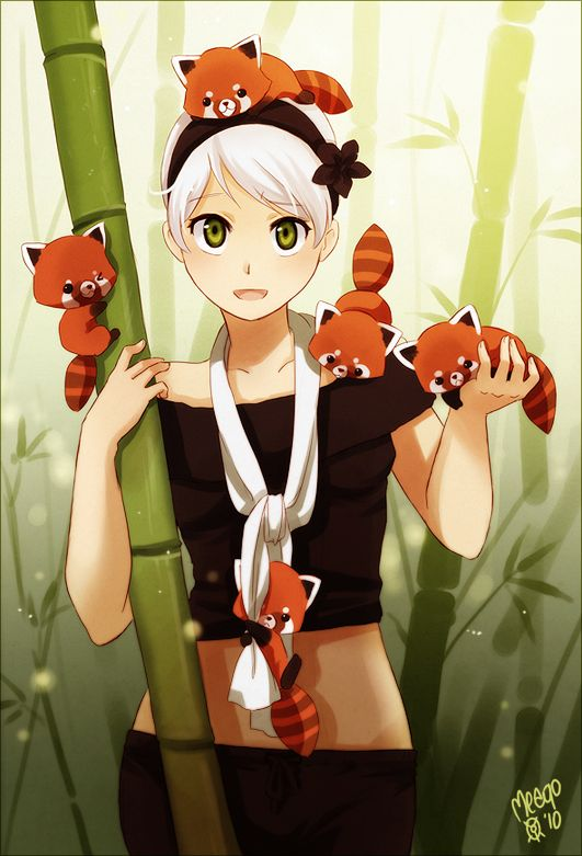 Drawn red panda japanese Panda anime Red 25+ ❤٩(๑•◡