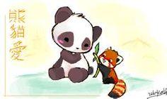 Drawn red panda kawaii Panda panda red Chibi Chibi