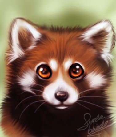 Drawn red panda kawaii Művészet Red Panda Motive Szerelem