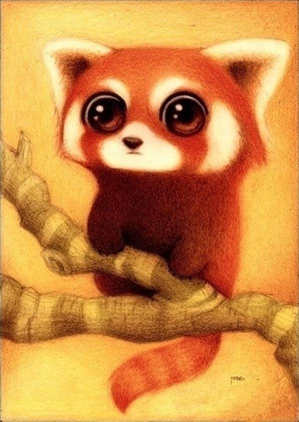 Drawn red panda kawaii (Red KAWAII Pin Sketch Red