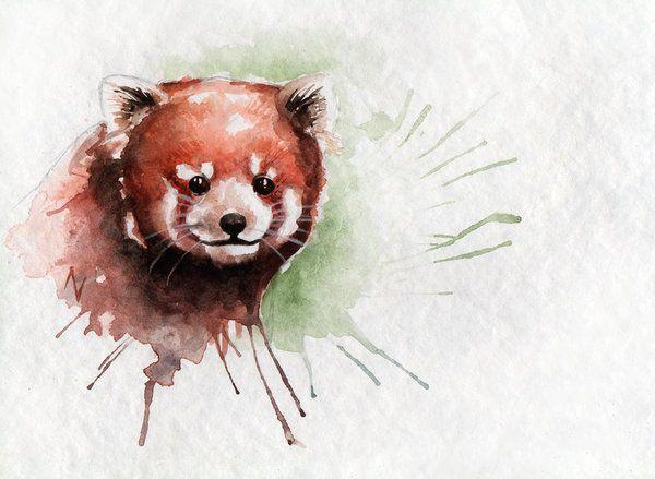 Drawn red panda koala Red Pinterest images AVindas by