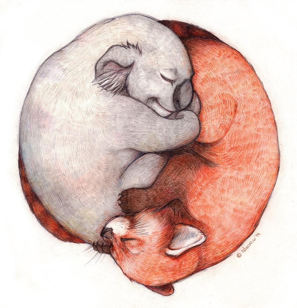 Drawn red panda koala DeviantArt  Aleoo red Whiter