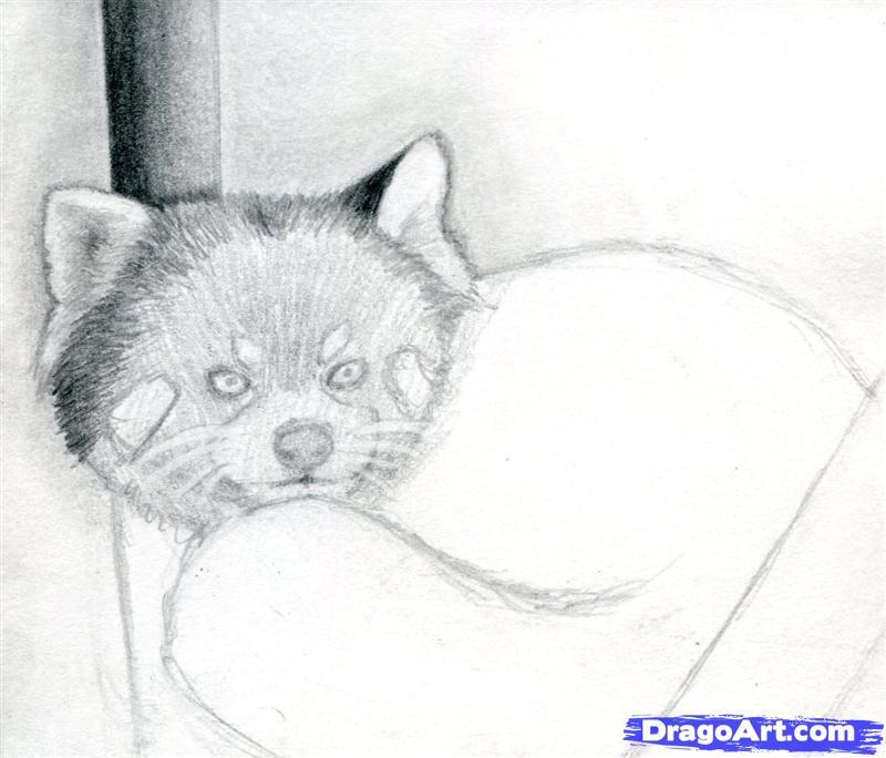 Drawn red panda pet Panda 5 to Draw Red