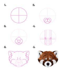 Drawn red panda really Pandas Animals: Draw Monika and