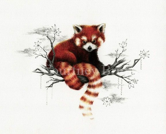 Drawn red panda really They images beautiful roux on