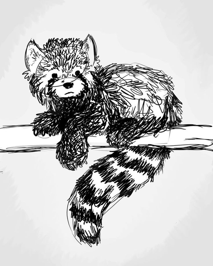 Drawn red panda sad animal 1495 and images pandas best