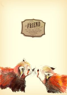 Drawn red panda sad animal Red Art Bear Cuteness Print