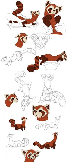 Drawn red panda sad animal By Pabu Red deviantART Lissa