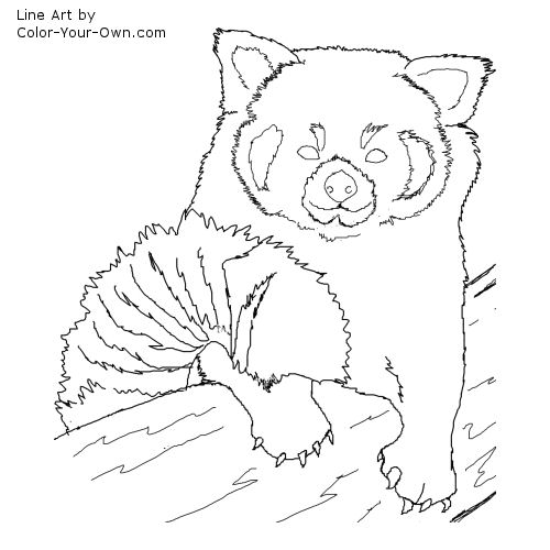 Drawn red panda sheet Red Children pages coloring pages