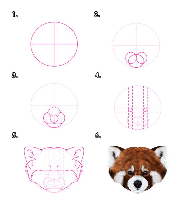 Drawn red panda sheet Red Design Tutorial Pandas Raccoons