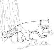 Drawn red panda sheet Coloring Coloring panda pages Red