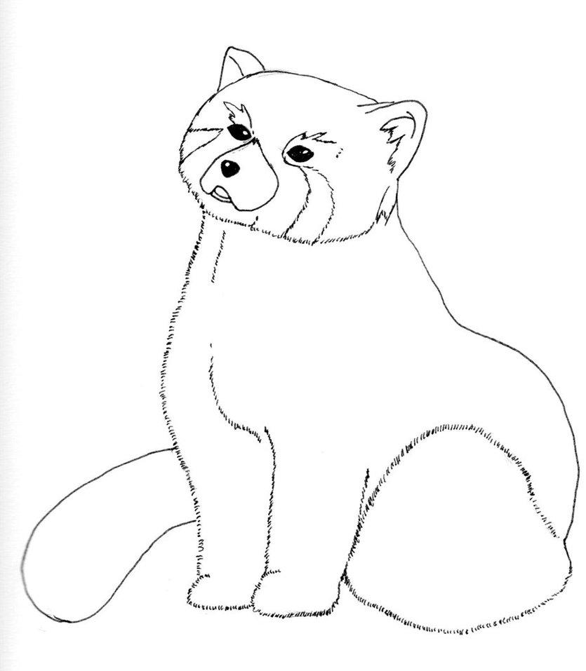 Drawn red panda sheet Red Panda How A a