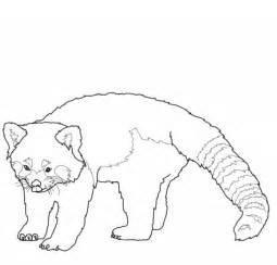 Drawn red panda sheet Free Pages page Coloring panda
