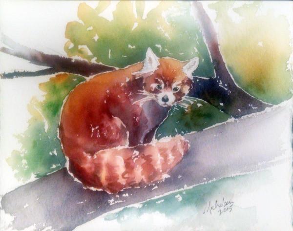 Drawn red panda small Panda animal spirit spirit meaning