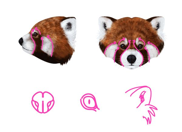Drawn red panda super cute Images they CreatingRed 33 What