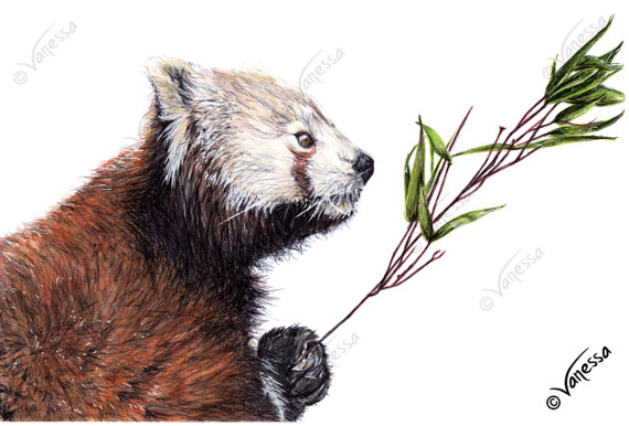 Drawn red panda tailed ORIGINAL of Drawing Red Signed