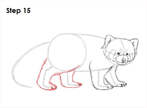 Drawn red panda tailed Draw 15 a Red How