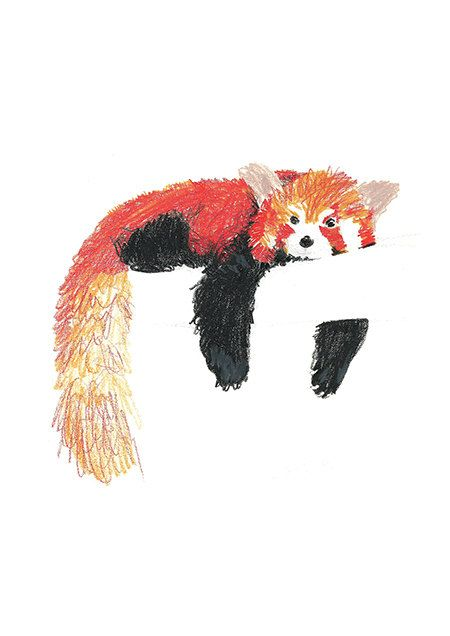 Drawn red panda tree On Color Red Original Paperie