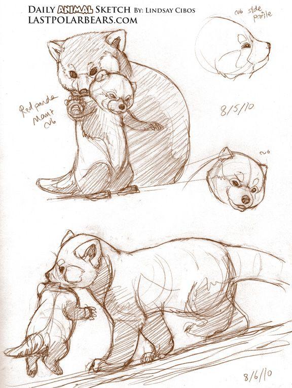 Drawn red panda tree 94 DZIKIE Tutorial best Pinterest