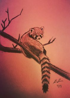 Drawn red panda tree Sketch Lucey want i Graphite