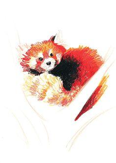 Drawn red panda tree Beside Color Red Panda Original